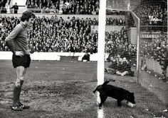 This was Liverpool Vs West Ham on of April 1972 . This pic was printed in the Daily Mail - shows the Liverpool goalie Ray Clemence watching a dog peeing up against the goalpost! Liverpool Fc, Football Odds, Retro Football, Ray Clemence, Liverpool Goalkeeper, Rare Historical Photos, Dog Pee, Leeds United, Posters