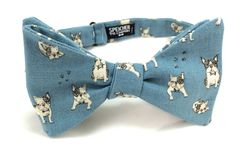 Boston Terrier in Blue Bow Tie - bowties, bowtie, bow ties, animal, dog lover, humane society, fun, quirky, best in show, cool, dogs, dog