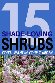 Find out which bushes to plant under trees in the shade garden in your backyard or front yard. These shrubs will help to brighten up your yard. #fromhousetohome #bushes #shade #gardeningtips #gardening #gardenideas Shade Loving Shrubs, Shade Shrubs, Shade Perennials, Shade Plants Container, Shade Garden Plants, Summer Plants, Garden Shrubs, Garden Trees, House Plants