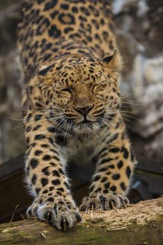 Scratching post by Andy Mckay on 500px