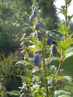 Fall Garden Appreciation | Fine Gardening