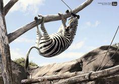 Zoo ad
