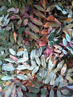 storing dried leaves