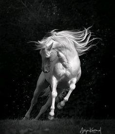 Horse Dance, Horse Art, Beautiful Creatures, Animals Beautiful, Animals And Pets, Cute Animals, Most Beautiful Horses, Majestic Horse, Horse Drawings