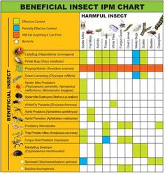beneficial insect chart
