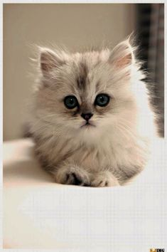 Stunning > Very Beautiful Cats Images #view