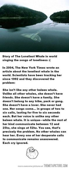 The loneliest whale in the world, omg that is the saddest story ever