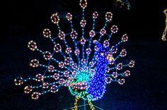 ZooLights starts Monday, November 24 at the Phoenix Zoo!