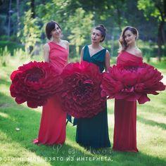 Фотографии Планета Гигантских цветов Тверь – 6 альбомов