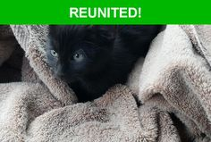 Great news! Happy to report that Panther has been reunited and is now home safe and sound! :)