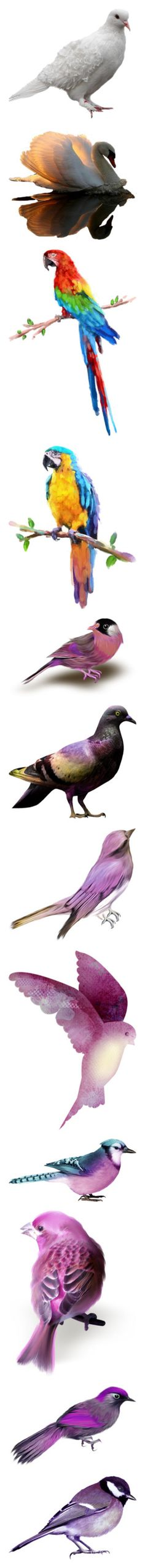 """""""Birds 2"""" by leaff88 ❤ liked on Polyvore featuring animals, birds, creatures, purple, aves, pigeon, filler, detail, embellishment and backgrounds"""