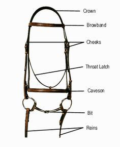 Parts of the Horse Worksheet | Western and English Bridle Parts