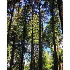 【megrin0620】さんのInstagramをピンしています。 《#ig_japan#instapic#instagood#japan#forest#tree#treestagram#treelovers#nature#naturelovers#green#sky#blue#hiking#walk#sunny#sunshine#summer#healing#cedar #御岩山#神社仏閣巡り#ハイキング#森#森林浴#自然#青空#木漏れ日#ヒーリング#緑 時々みえる青空 すぐ近くを流れる小川のせせらぎに癒されます》
