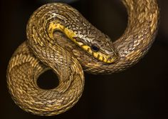 S is for Snake Get Informed with Worthy Readings. http://www.dailynewsmag.com