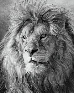 "Lucie Bilodeau's Newsletter - The Art of Lucie Bilodeau ""Portrait of a Lion"" used for a magazine cover Lion Images, Lion Pictures, Lion And Lioness, Lion Of Judah, Lion Tattoo Sleeves, Sleeve Tattoos, Lion Photography, Tattoo Photography, Photography Camera"