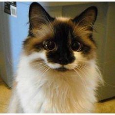 Adorable little kitten! ... https://www.meowmoe.com/33782/