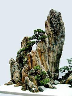 #Rocky #Mountain #Bonsai http://www.roanokemyhomesweethome.com