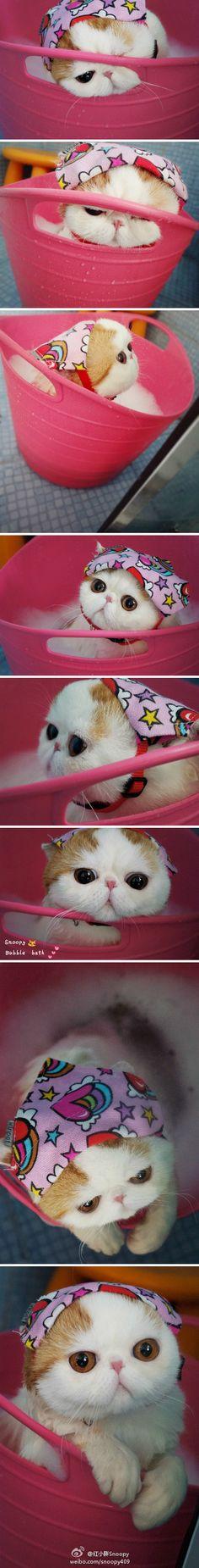 Snoopy cat!