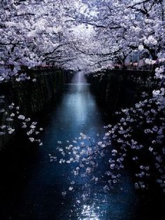 flowers, beautiful, and photography image Scenery Pictures, Nature Pictures, Beautiful World, Beautiful Places, Sakura Cherry Blossom, Cherry Blossoms, Blossom Trees, Amazing Nature, Pretty Pictures
