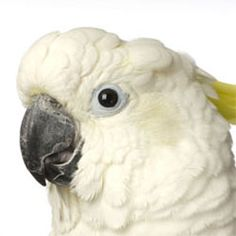 In the wild, parrots live and breathe in fresh air and they are not exposed to…