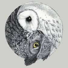 owl yinyang twinz | via mysticmamma.com