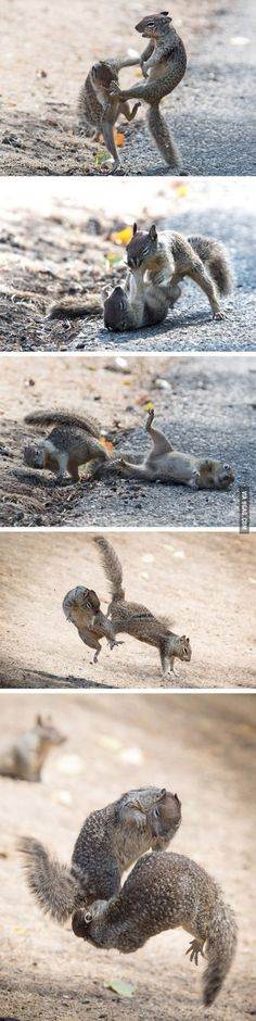 Everybody was Kung Fu fighting! Two squirrels are spotted having a blast in San Francisco