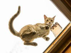 Questo gatto si diverte in questo appartamento a Bologna!