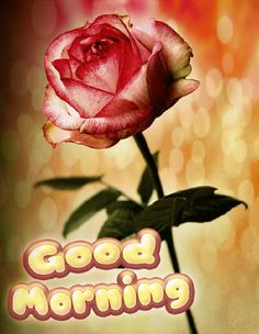 Start your day right with these beautiful good morning picture quotes that will help enrich, uplift and empower your day. Good Morning Gift, Love Good Morning Quotes, Good Morning Beautiful Pictures, Good Night I Love You, Good Morning Roses, Good Morning Picture, Morning Pictures, Morning Wish, Good Morning Images