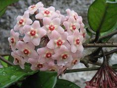 Mejores 99 Imagenes De 1001 Plantas Y Flores En Pinterest En 2018 - Plantas-de-exteriores-con-flores