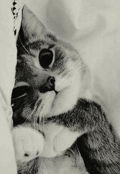 Trendy - Cute Kitty Cats Drawings #twitter
