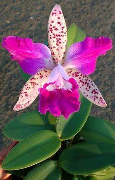 flores hermosas - Buscar con Google