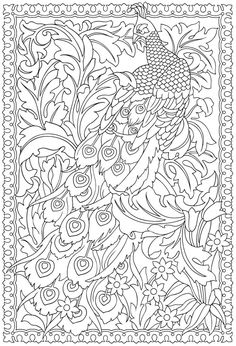 colouring page peacock - Google Search