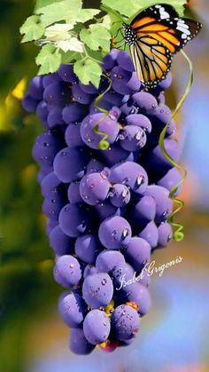 17 Ideas For Fruit Garden Photography L'art Du Fruit, Fruit Art, Fruit And Veg, Fruit Trees, Fruits And Vegetables, Fresh Fruit, Beautiful Fruits, Beautiful Flowers, Still Life