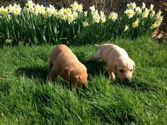 Having fun exploring the great big world outside....    #puppies
