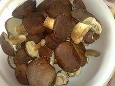 Pilze trocknen - Wie lassen sich Pilze trocknen? Lernen Sie die verschiedenen Methoden kennen