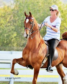 Julie DeVault at Liz Bolton Stables riding the Mighty Moe. Another beautiful Saddlebred horse. Horse Showing, Dressage Saddle, English Tack, Morgan Horse, American Saddlebred, Mane N Tail, Modern Pictures, Hunter Jumper, My Horse