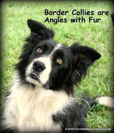 So blessed to now how my own border collie angel watching over me. Angels with fur fur sure.