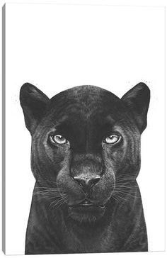 Black Panther Drawing, Black Panther Tattoo, Black And White Sketches, Black Art, Black White, Animal Paintings, Animal Drawings, Panther Cat, Vintage Illustration Art