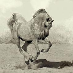 Красивые фотографии лошадей Войтека Квятковски