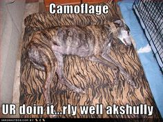 funny-dog-pictures-this-dog-has-really-great-camouflage