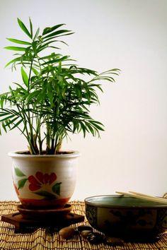 Indoor House Plants On Pinterest Indoor Houseplant And
