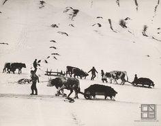 Martin Martinček (* 30. január 1913, Liptovský Peter - † 2. máj 2004, Liptovský Mikuláš):  Slovacchia, Vozenie hnoja 1957 - 1964 How To Make Light, Old Photos, Countryside, Folk Art, Moose Art, Nostalgia, Black And White, World, Winter