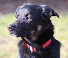 Zorro (Hunde gross) • Tierschutzverein Stuttgart und sein Tierheim