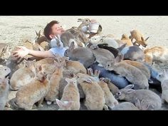 Guy Gets Smothered by Bunnies on Japan's Rabbit Island! - YouTube