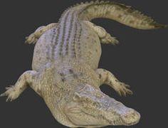 Crocodile Statue 12FT