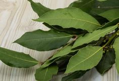 Health tips,Home remedies,Health news Solid Shampoo, Natural Shampoo, Bay Leaves, Plant Leaves, Laurel Plant, Bouquet Garni, Brewers Yeast, Baby Oil, Medicinal Plants