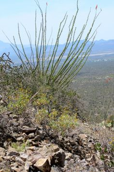 Gates Pass: Tucson Mountain Park