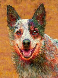 Australian cattle dog- a quirky working breed. They laugh- I swear they do- okay maybe its more of a snicker.
