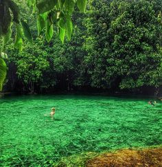 Emerald pool, krabi, Thailand -underground thermal stream in Klong Thom district -temperature of the pool is consistently 30-50 degrees Celsius -1-hour drive from Krabi