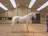 *▶Een mens heeft wel een jaar nodig om te leren lopen. Een paard kan dat al direct na zijn geboorte. Kijk maar eens hoe snel dat gaat.